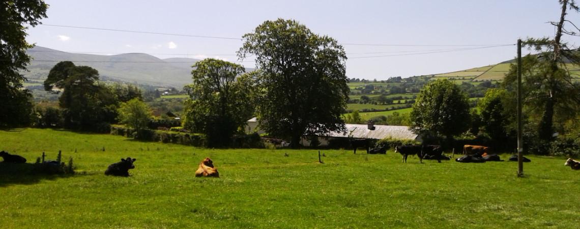 Farm_Lawn Field